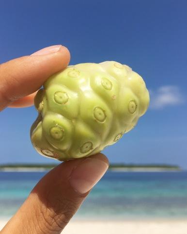 Maldivian Noni