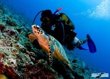 UW diver and turtle