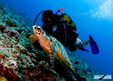 UW diver and turtle