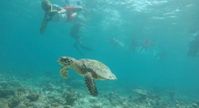 Retreat to Maldives July Day 4 Turtle Karim